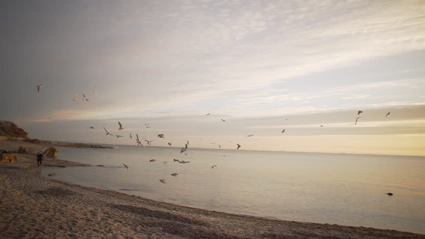 Sport male running along sea shore of bay while gulls flying in slowmotion | Shutterstock HD Video #26858431