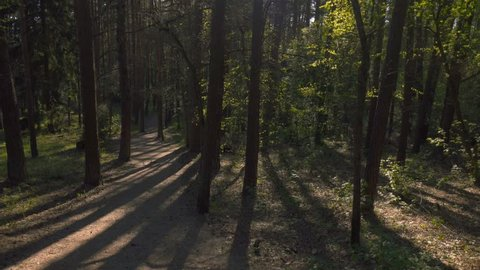 Walking in woods pov steadicam nature landscape