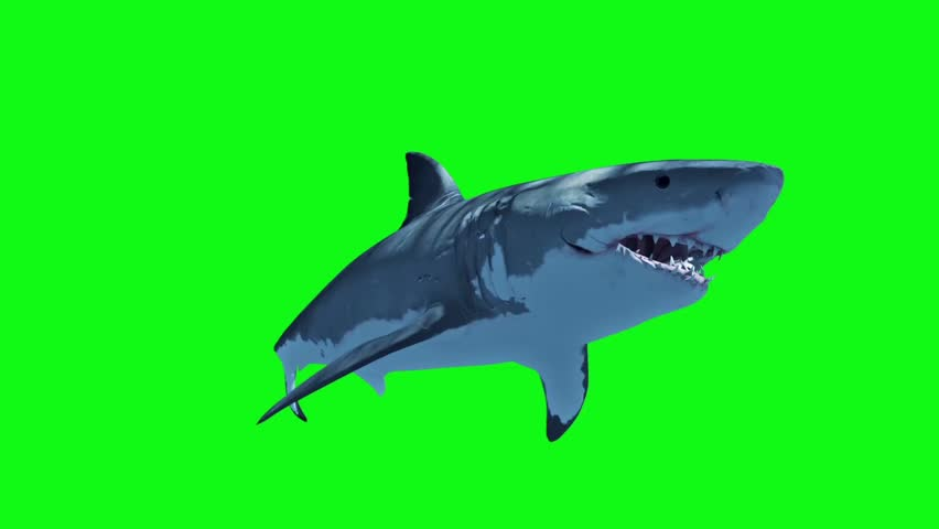 White Shark Swim Fast Loop Green Screen 3D Rendering Animation