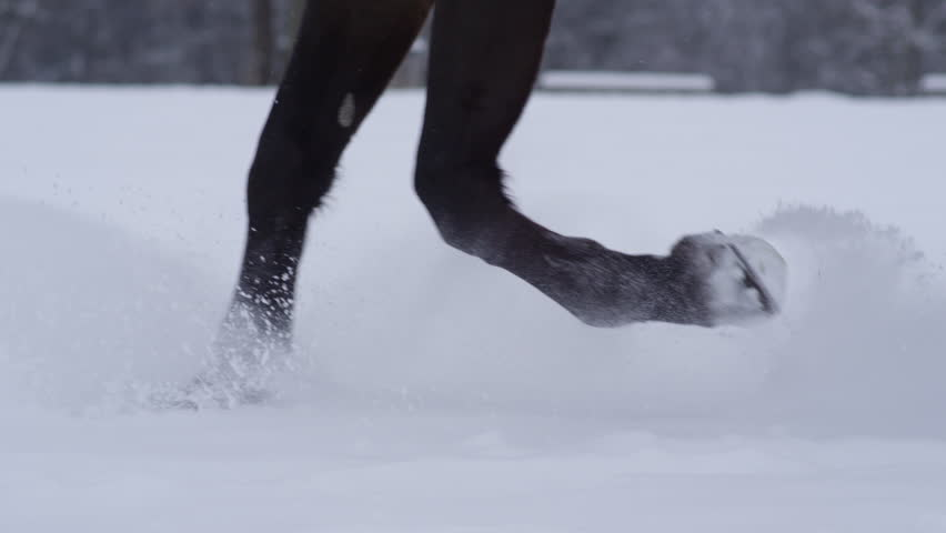 SLOW MOTION CLOSE UP DOF Detail of strong black horse legs running through soft snow blanket in the wilderness on white winter day. Horse hooves trotting in fresh snow on cold day in winter wonderland