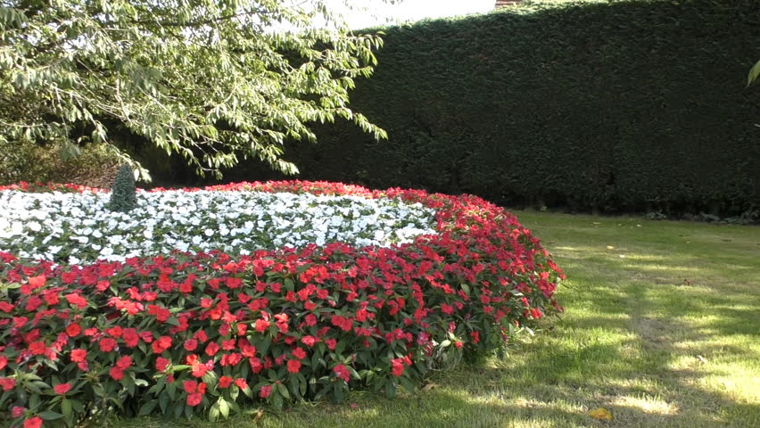 A Flower Bed Of Red Stock Footage Video 100 Royalty Free 27115351