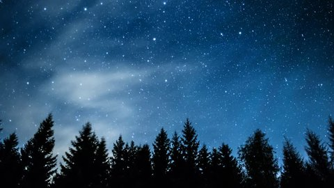 Timelapse of stars moving in night sky over pine trees.