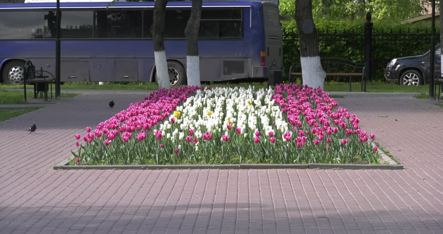 Video footage with view of flowers near monument erected in memory of Russian Miloradovich troops fought French army of Murat in 1812 in surroundings of Podolsk town in central Russia, south of Moscow