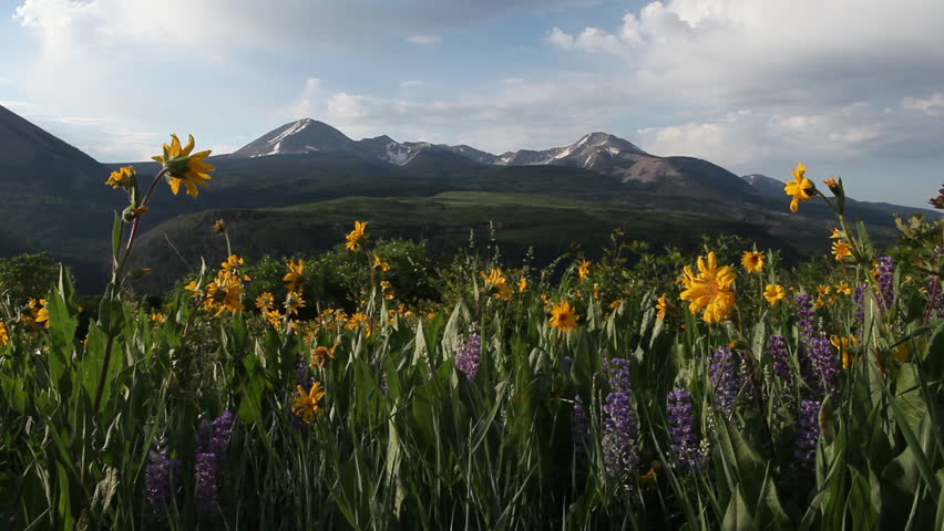 Static shot of clouds and blue sky over yellow Arrowleaf Balsamroot wildflowers and purple lupine wildflowers in front of the snowy La Sal Mountains in Utah in Summer