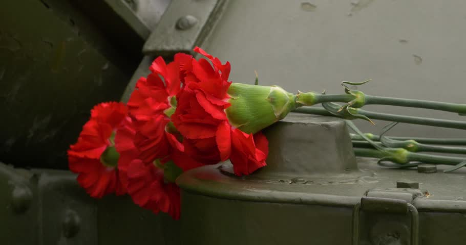 Howitzer and carnation. Carnation flowers symbol of mourning. Close up   Shutterstock HD Video #27427951