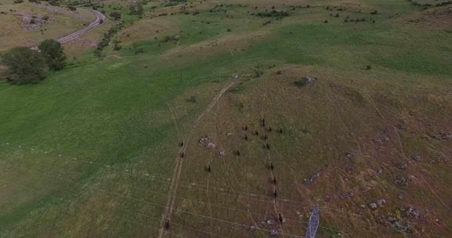 Los drones sobrevuelan los toros y sus impresionantes pastos | Shutterstock HD Video #27482821