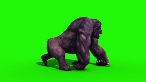 Gorilla Walkcycle Side Green Screen 3D Rendering Animation