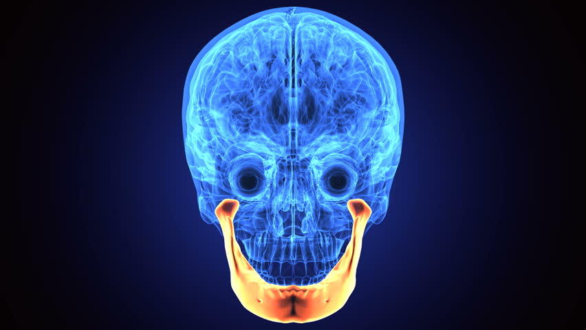 Rat Skull Stock Video Footage 4k And Hd Video Clips Shutterstock