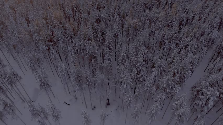 Aerial view of a beautiful Lapland winter landscape | Shutterstock HD Video #27751261