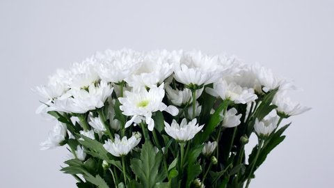close-up, lowers, bouquet, rotation, floral composition consists of white Chrysanthemum Chamomile bacardi.