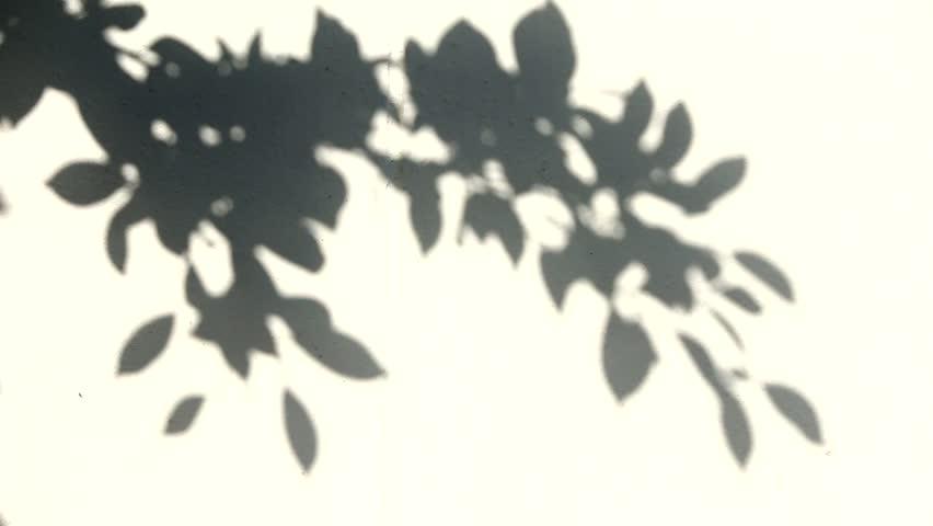 Leaf shadow on the wall | Shutterstock HD Video #28073041