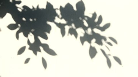 leaf shadow on the wall