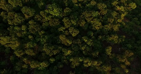 4K Aerial shot of a tropical rain forest.top view of green trees from drone.