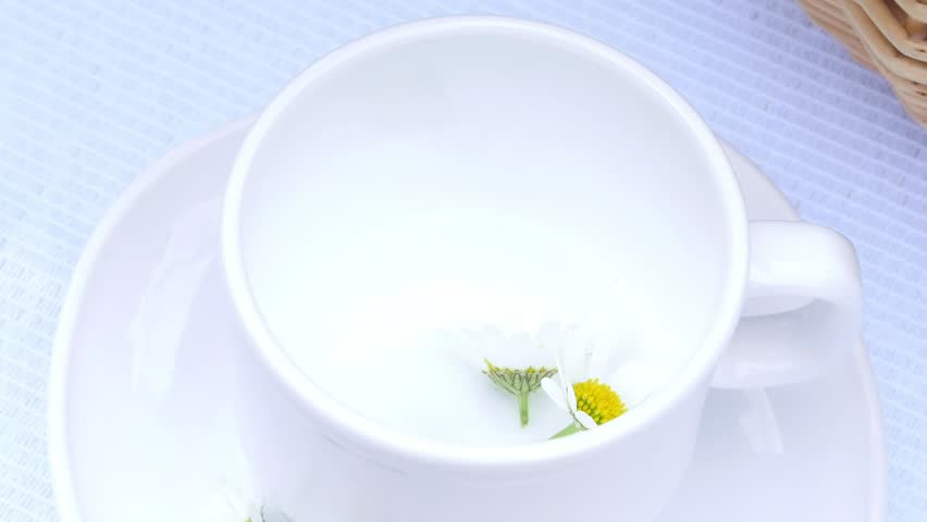 A close-up, a white cup, there are chamomile flowers in it. The cup is filled with boiling water, chamomile tea