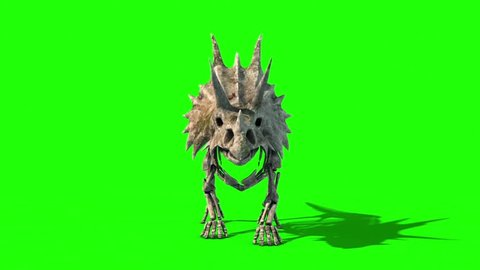 Triceratops Skeleton Walkcycle Front Jurassic World Green Screen 3D Rendering Animation