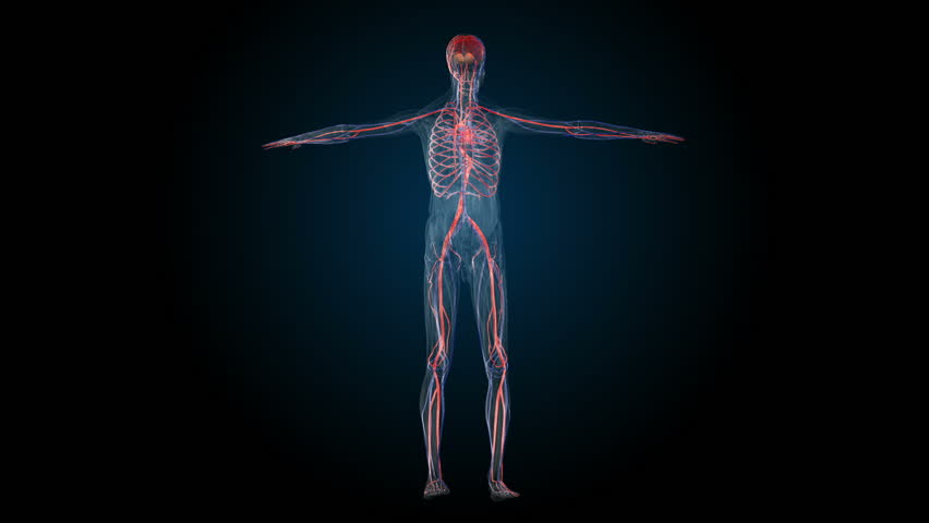All Human Body Systems Transition Stock Footage Video 100 Royalty Free 28311421 Shutterstock