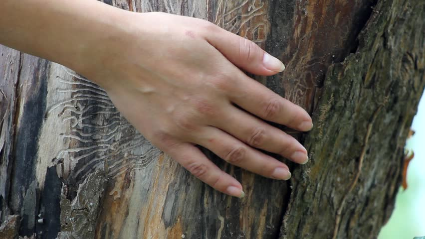 the hand stroking tree, tenderness