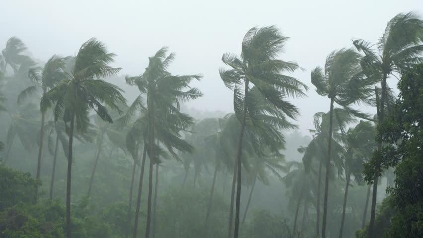 Palm Trees Under Heavy Tropical Rain