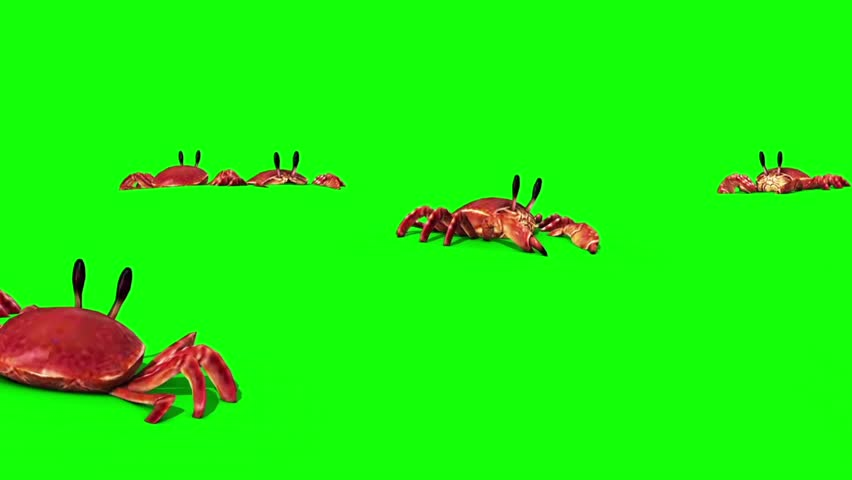Group of Crab on the Sand Green Screen Close 3D Rendering Animation