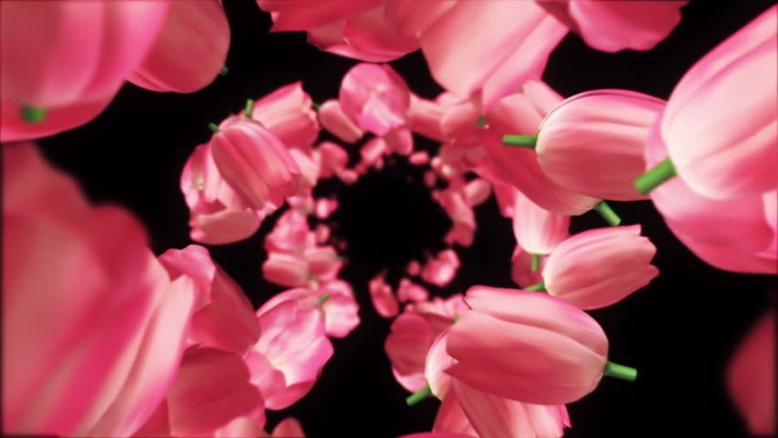 Animation flying of realistic flowers buds on clear and bright background. Animation of seamless loop