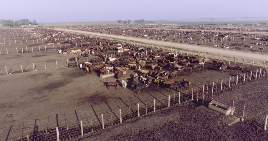 Aerial view of a cattle feedlot | Shutterstock HD Video #28856311
