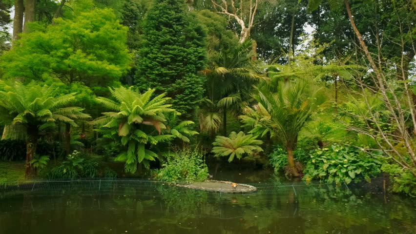Gimbal shot featuring giant ferns and a pond in the Parque Terra Nostra park in Sao Miguel, The Azores, Portugal