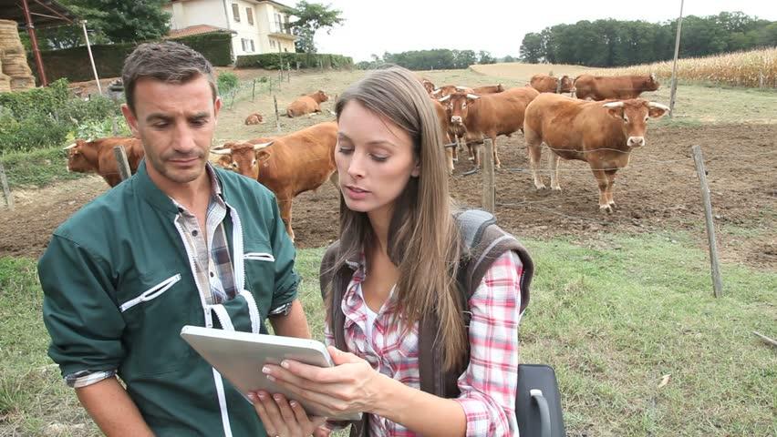 Veterinarian visiting cow breeder