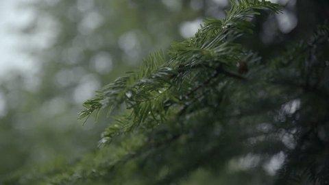 Forest rain, slowmotion