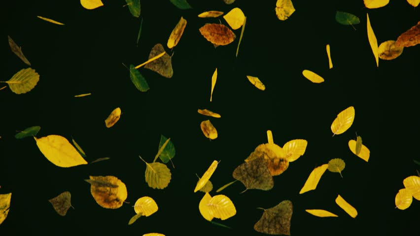 Falling autumn leaves against a dark background. This video is a 3d render and seamlessly loops. | Shutterstock HD Video #29231701