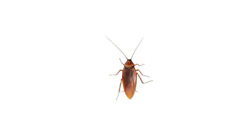 the cockroach runs,  alpha channel, then stops, a cycle