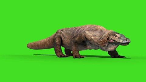 Komodo Dragon Varanus Komodoensis Lizard Walkcycle Green Screen Animation 3D