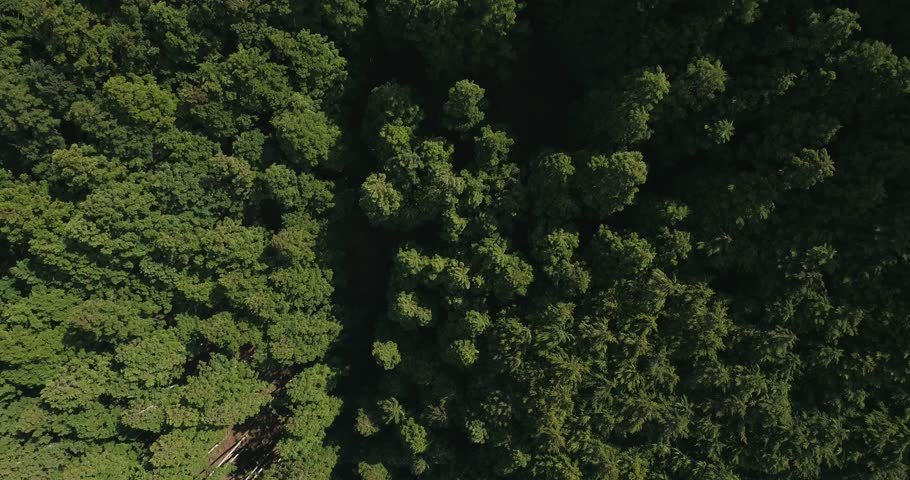 Cinematic aerial footage of cedar forest at Mount Yoshino, Nara Prefecture, Japan
