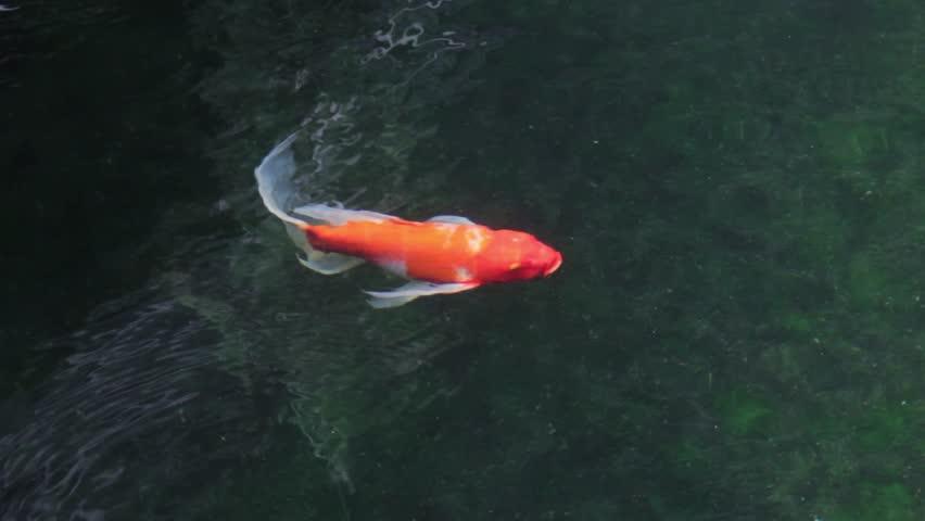 Header of above water