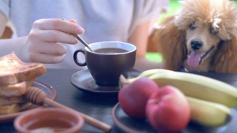 Cinemagraph - Breakfast woman having morning coffee on terrace.  Motion Photo.