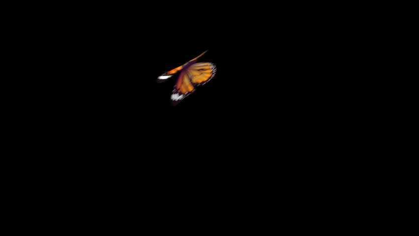 Realistic Yellow Butterfly flying left to right isolated on transparent background. PNG Alpha Channels Quicktime MOV. 3d render animation. Slow Motion.