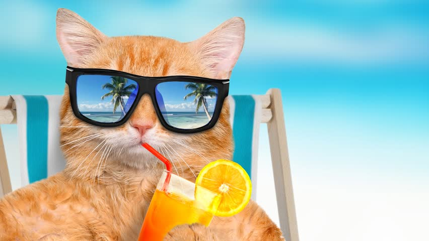 Cinemagraph - Cat wearing sunglasses relaxing sitting on deckchair in the sea background. Red cat drinks lemonade. Motion Photo.