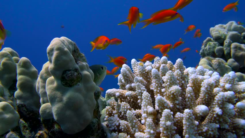 Colorful Fish on Vibrant Coral Reef, Red sea 4K | Shutterstock HD Video #30033115