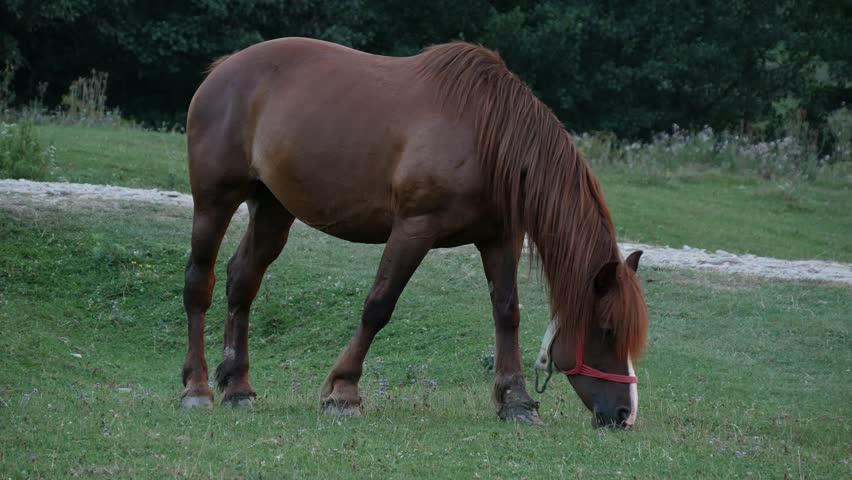 Beautiful Brown Horse Grazing on Farmland Grassland Livestock Farm Image (Ultra High Definition, UltraHD, Ultra HD, UHD, 4K, 3840x2160)