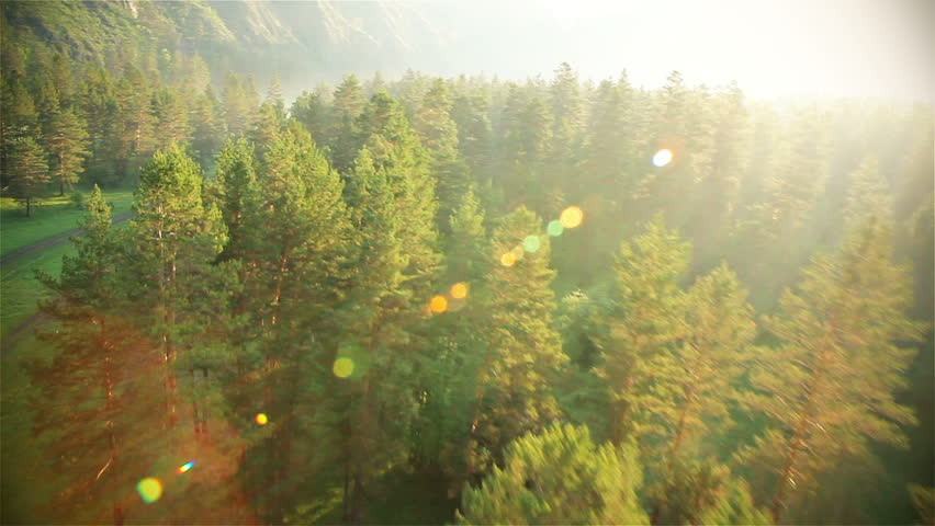 Aerial View. Flying over the beautiful sunny forest trees. Aerial camera shot. Landscape panorama. Altai, Siberia. | Shutterstock Video #3021262