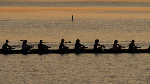 Silhouette of Rowing Team on Lake, in unison. 4K UHD.