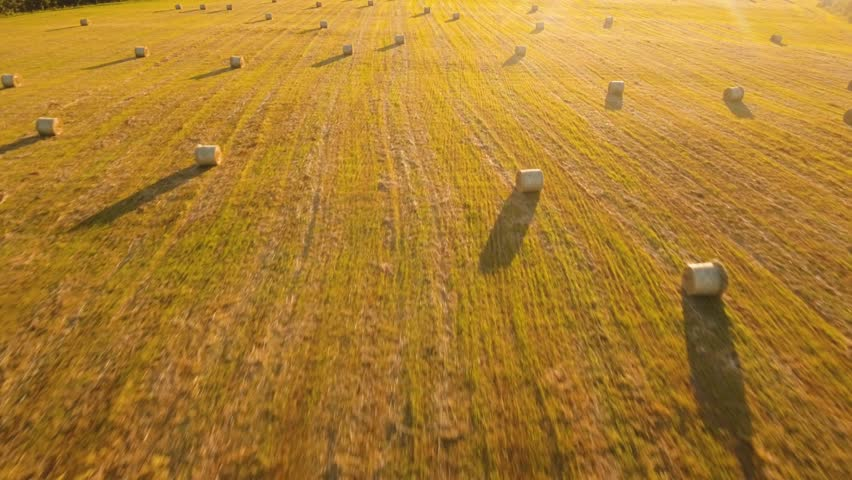 Aerial view rolls Haystacks straw on the field, after harvesting wheat. Summer Farm Scenery with Haystacks. Rural landscape at sunset. drone footage, 4k