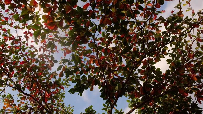 Header of fall under