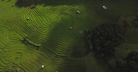 Top view of the rice paddy fields in northern Thailand