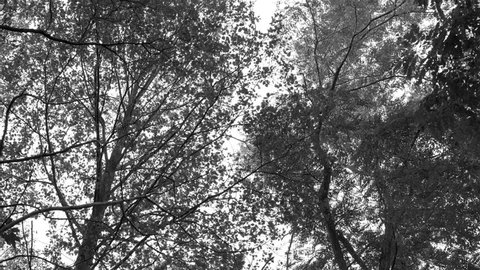 silhuette of tree canopy moving in the wind