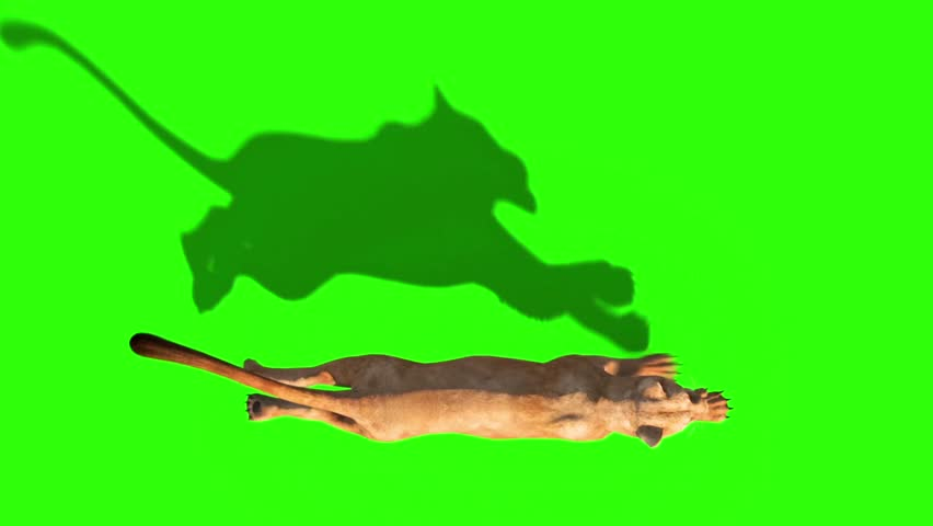 Lioness Runcycle Top Green Screen Animals 3D Rendering Animation