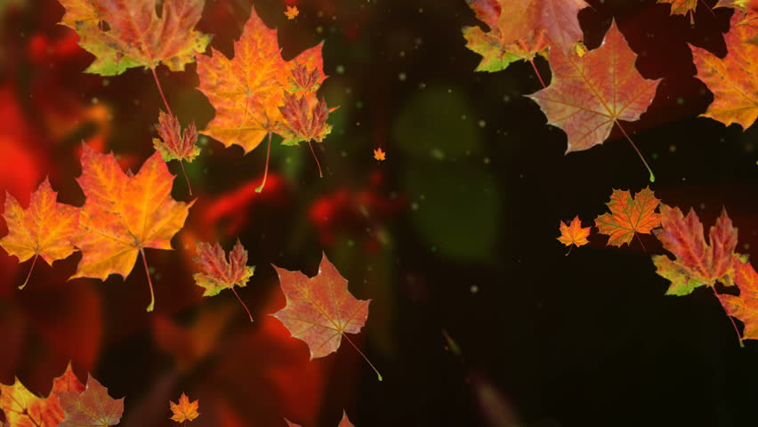 Autumn leaves falling in slow motion and sun shining through fall leaves. Beautiful landscape background. | Shutterstock HD Video #30655891