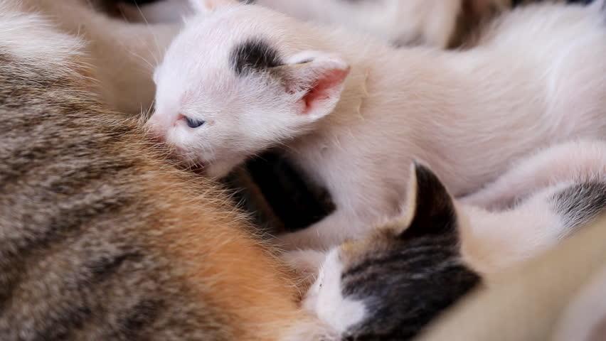 Young Beautiful Mother Breastfeeding Her Newborn Baby