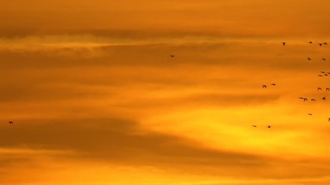 Sunset with duck birds flying against bright orange sky with clouds