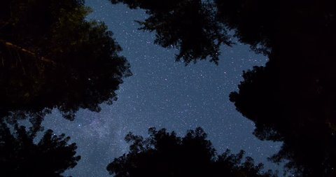Night Sky above the Giant Redwood Treetops in Humboldt Redwood State Park. Zoom Out and Star trail effect.