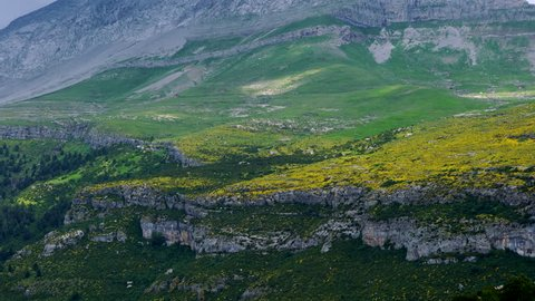 Flowers of Erizon, Ordesa y Monte Perdido National Park, Huesca province, Aragon, Spain, Europe